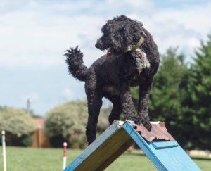 Обучение и тренировка – дрессировка собаки
