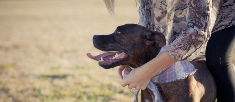 Воспитание и дрессировка собак бойцовских пород