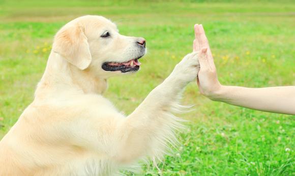Язык общения с собакой