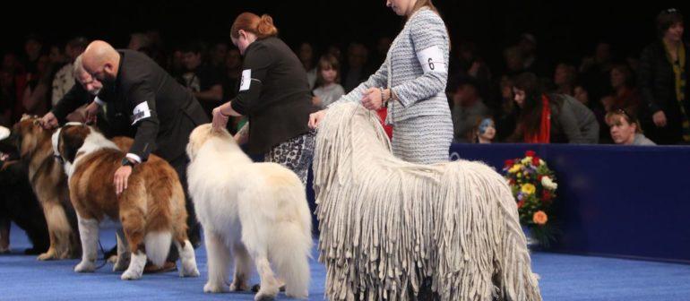 Для чего нужны выставки собак?