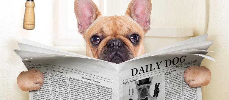 Не наказывайте собаку за лужи