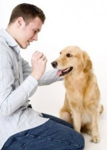 Воспитываем собаку