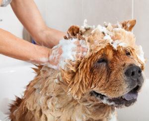 Гигиена собаки при наличии в доме грудного ребенка