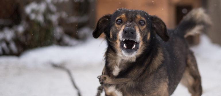 Воспитание агрессивной собаки