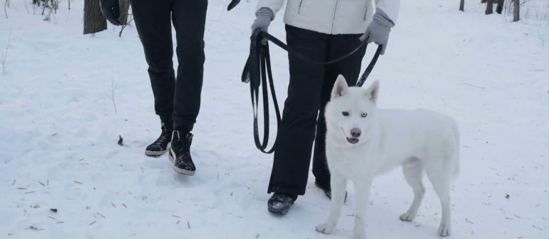 Гулять с собакой зимой нужно правильно!
