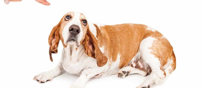 Как выбрать время наказания щенка