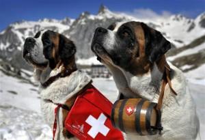 11 любопытных фактов о собаках-спасателях