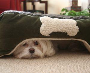 Трусость у собак