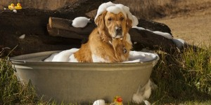 Как правильно вымыть собаку