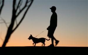 Собака. Особенности собачьей жизни