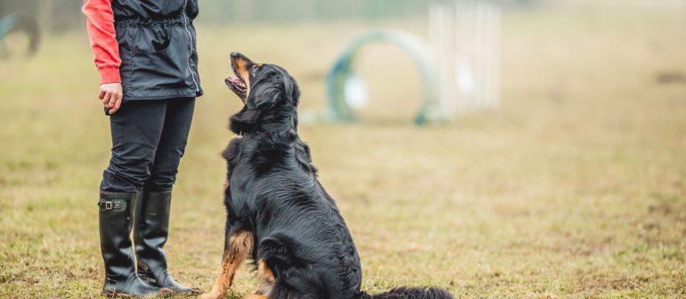 Что нельзя делать при дрессировке собаки