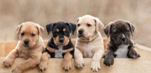 Что следует знать тем, кто собрался завести собаку?