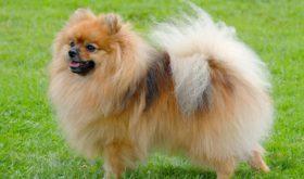 Классификация собачьих пород