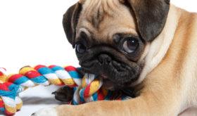 По каким критериям выбирать игрушки для собак